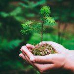practica-ambiental